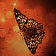 Hackberry Emperor - Asterocampa Celtis Poster