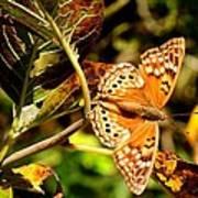 Hackberry Emperor Butterfly Poster