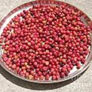 Haitian Cherries Poster