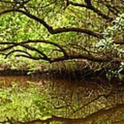 Halfway Creek At Low Tide - Everlglades Poster by Matt Tilghman