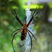 Halloween Spider Poster by Annette Allman