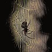 Halloween - Spider Poster