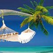 Hammock Palm And Ocean Poster