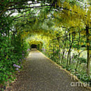 Hampton Court Palace Flower Tunnel Poster