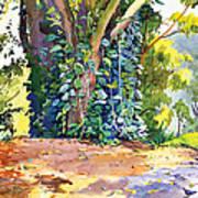 Hana Ivy/vine Tree Poster