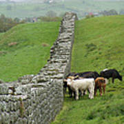 Hangin Out At Hadrians Wall England Scotland Poster