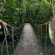 Hanging Bridge Poster