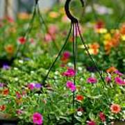 Hanging Flower Baskets Shallow Dof Poster