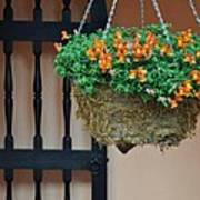 Hanging Flowers And Black Gate Poster