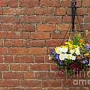 Hanging Flowers Pot Poster