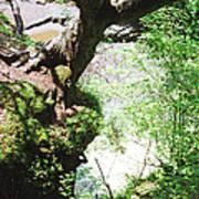 Hanging Tree Poster