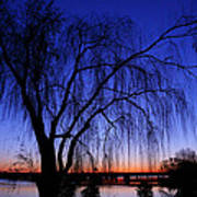 Hanging Tree Sunrise Poster by Metro DC Photography