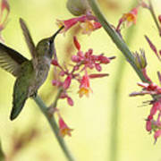 Happy As A Hummingbird  Poster