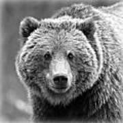 Happy Bear Poster