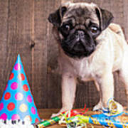 Happy Birthday Cute Pug Puppy Poster by Edward Fielding