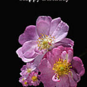 Happy Birthday Pink Roses Poster