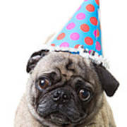 Happy Birthday Pug Card Poster