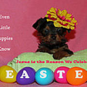Happy Easter Poster by Lorna Rogers Photography