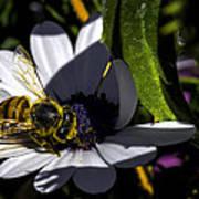 Happy Honey Bee Poster