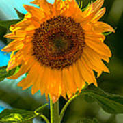 Happy Sunflower Poster
