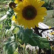 Happy Sunflowers Poster