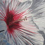 Hardy Hibiscus Poster