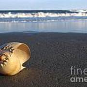 Harp Shell On Beach Poster