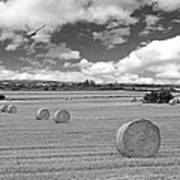 Harvest Fly Past Black And White Square Poster