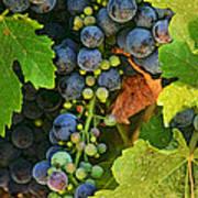 Harvest Time 2 Poster