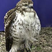 Hawk 3 Poster