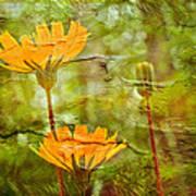 Hawkweed Wildflower Poster