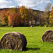 Hay Bales And Fall Colors Poster