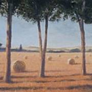 Hay Bales And Pines, Pienza, 2012 Acrylic On Canvas Poster