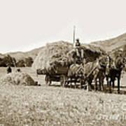 Horse-drawn Hay Wagon Carmel Valley California Circa 1905 Poster