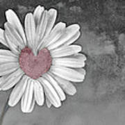 Heart Of A Daisy Poster