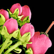 Heath Flowers Poster