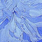 Heavenly Blue Dahlia Poster