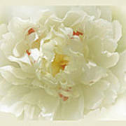 Heavenly Peony With Frame Poster
