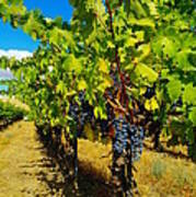 Heavy On The Vine At The High Tower Winery  Poster