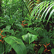 Heliconia And Palms With Green Anole Poster