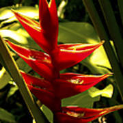 Heliconia II Poster
