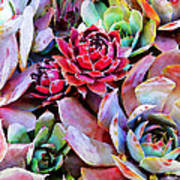 Hens And Chicks Series - Copper Tarnish  Poster
