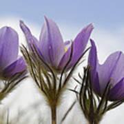 Heralding Spring  Poster