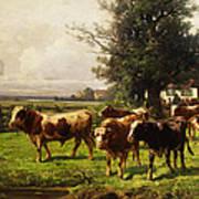 Herd Of Cows Poster