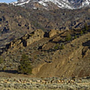 Herd Of Elk   #7740 Poster