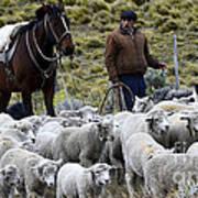 Herding Sheep Patagonia 3 Poster