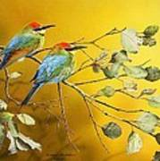 Here Comes The Sun - Rainbow Bee-eaters Poster