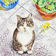 Here Kitty Kitty Kitty Poster
