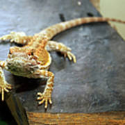 Here Lizard Lizard Poster