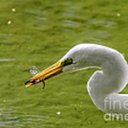 Heron And Dragonfly Poster